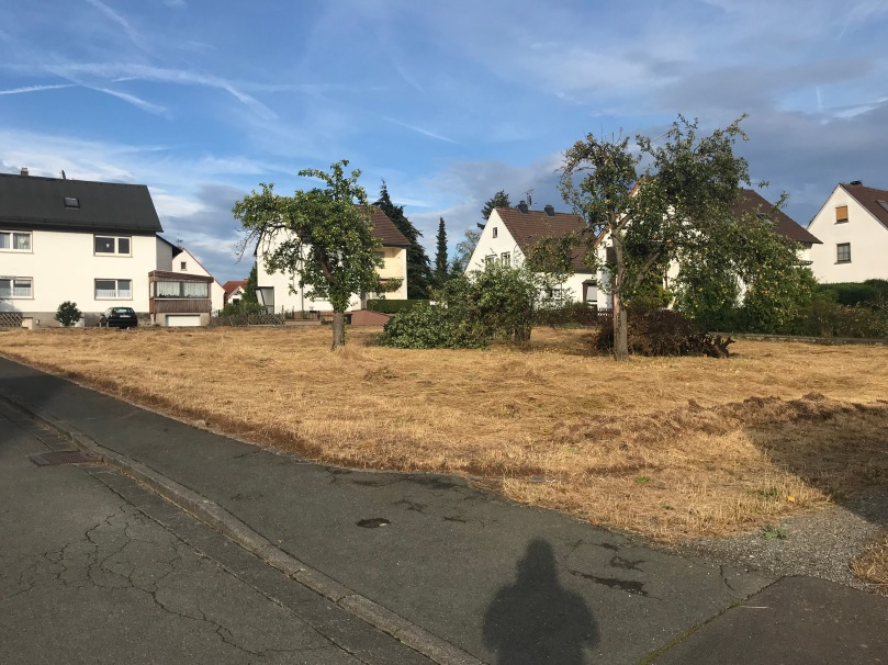 Sturm - gefällter Baum
